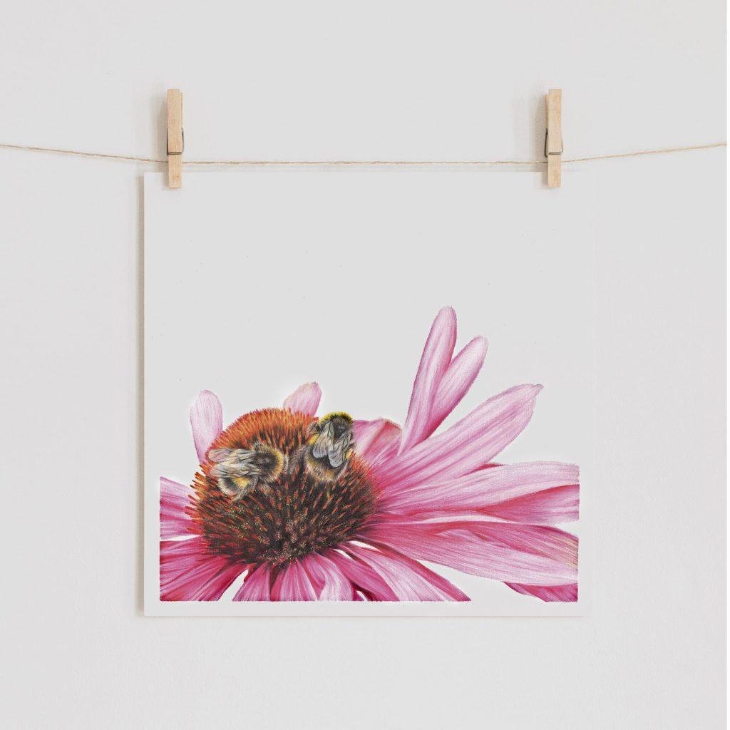 Bumblebee and Echinacea Print