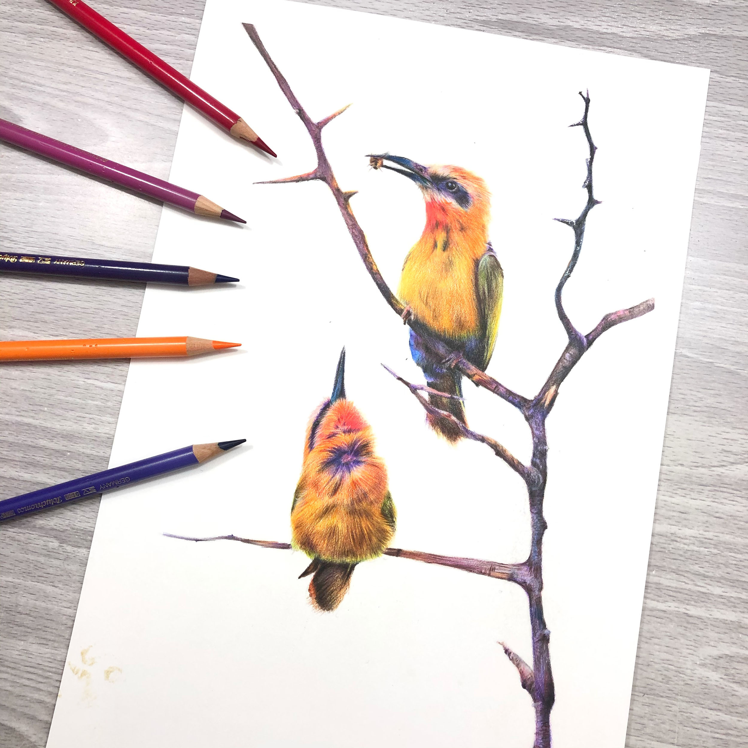 bee eater original art