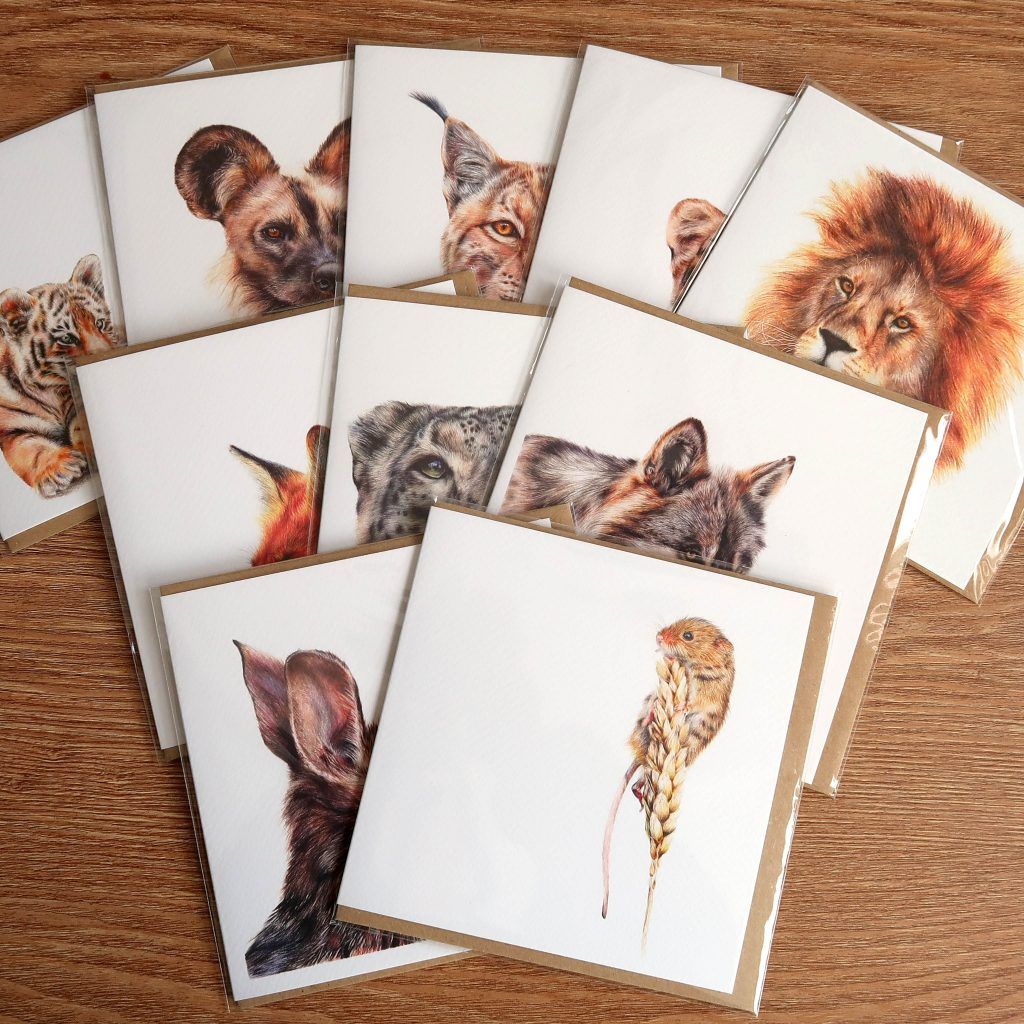 Wildlife Greetings Cards | Pack of 10 | Wildlife Mammals